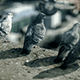 Отпугивание птиц